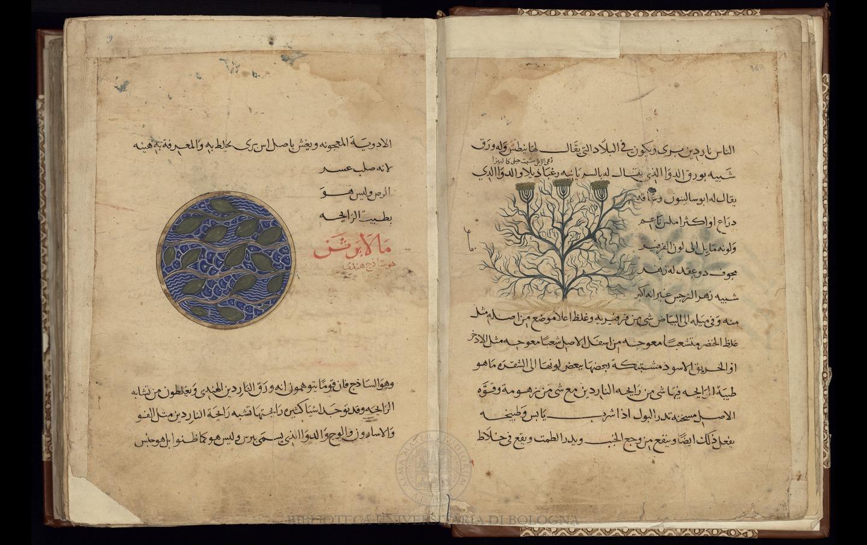 Maqalat Diusquridis al-hakim (De Materia Medica)